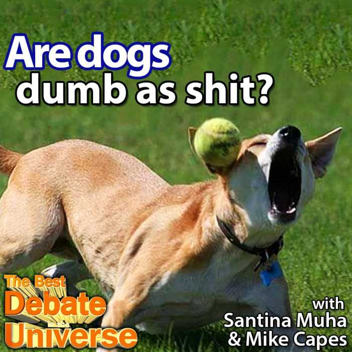 Madcast Media Network - The Best Debate in the Universe - Are dogs dumb as shit? We ask the hard-hitting questions here at Madcast Media. You're welcome. Here's the most neutral way I could think of phrasing the question: ARE DOGS DUMB AS SHIT?
